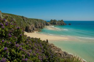 flowers on porthcurno cliffs