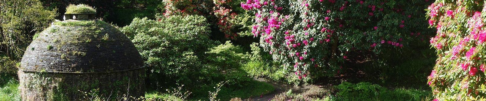 Cotehele flowers