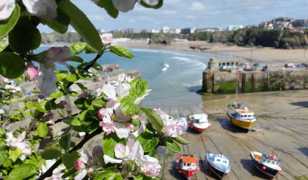 Newquay harbour view