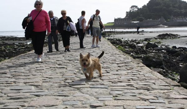 dog at st michaels mount