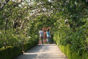 couple walking through apple arches
