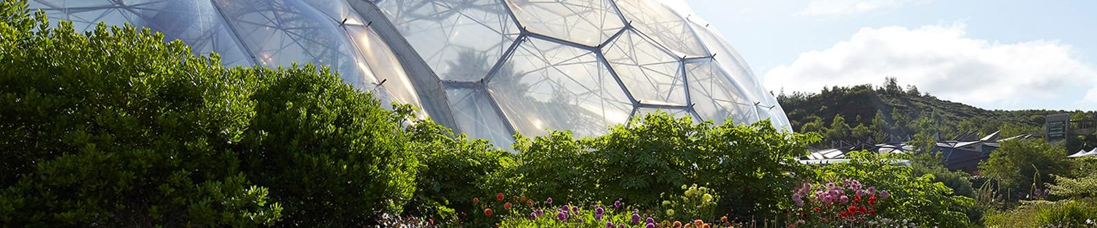 bushes and biomes