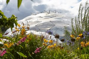biomes and flowers