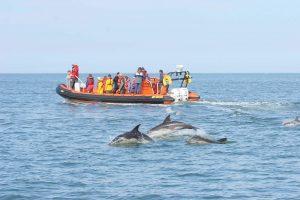 rib cruise passengers watching dolphins