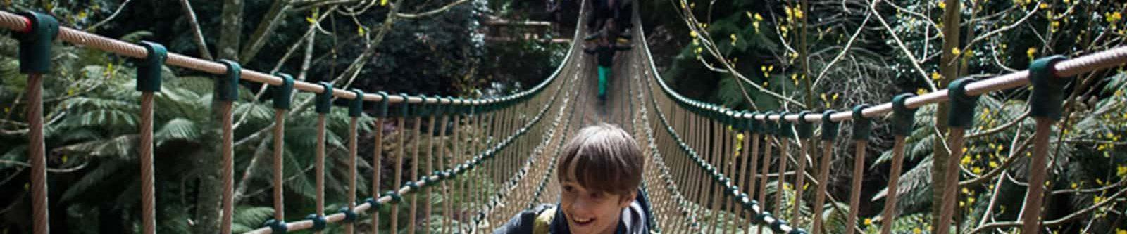 jungle rope bridge