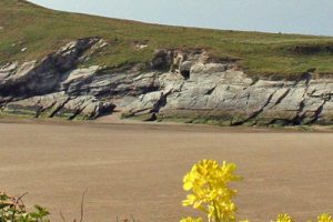 yellow flowers at porth beach