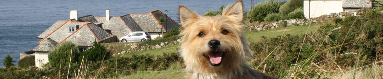 little terrier dog in grass